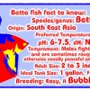 Quick Fact About Betta Fish on Your T-Shirt (Merchandise)