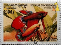 betta splendens stamp